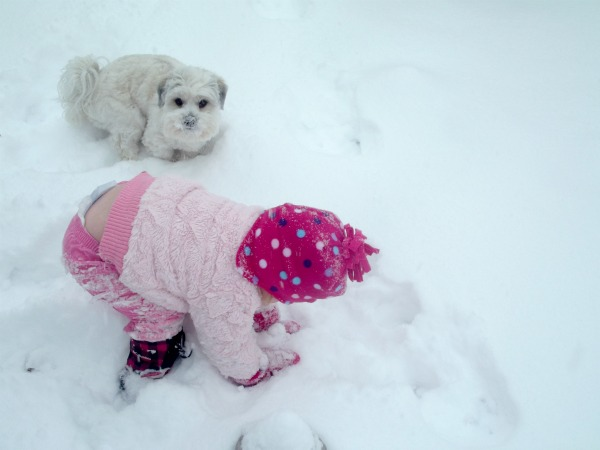 toddler and puppy playing in the snow