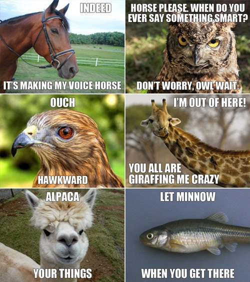 more clever animal humor
