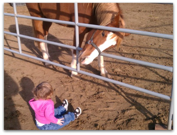 Toddler seeing horse for the first time