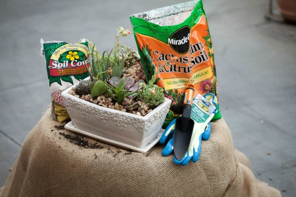 Container gardening with Succulents
