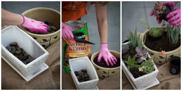 How to grow and plant succulents -  #DIHWorkshop