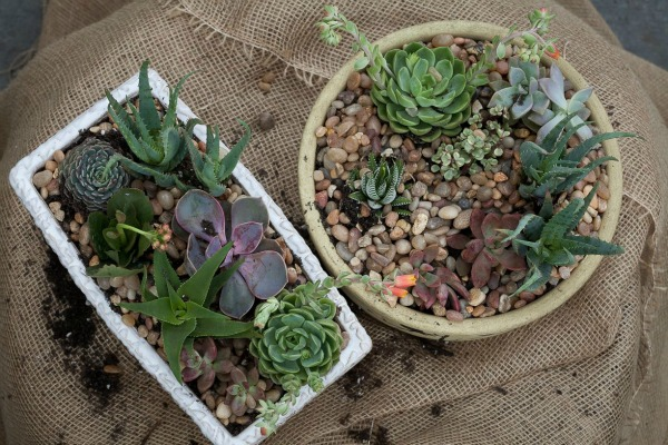 Gardening Inspired by Pinterest - Using Succulents