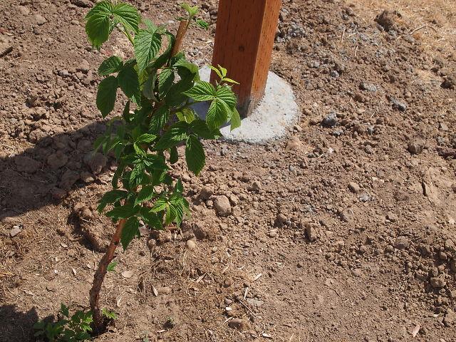 Building a veggie garden