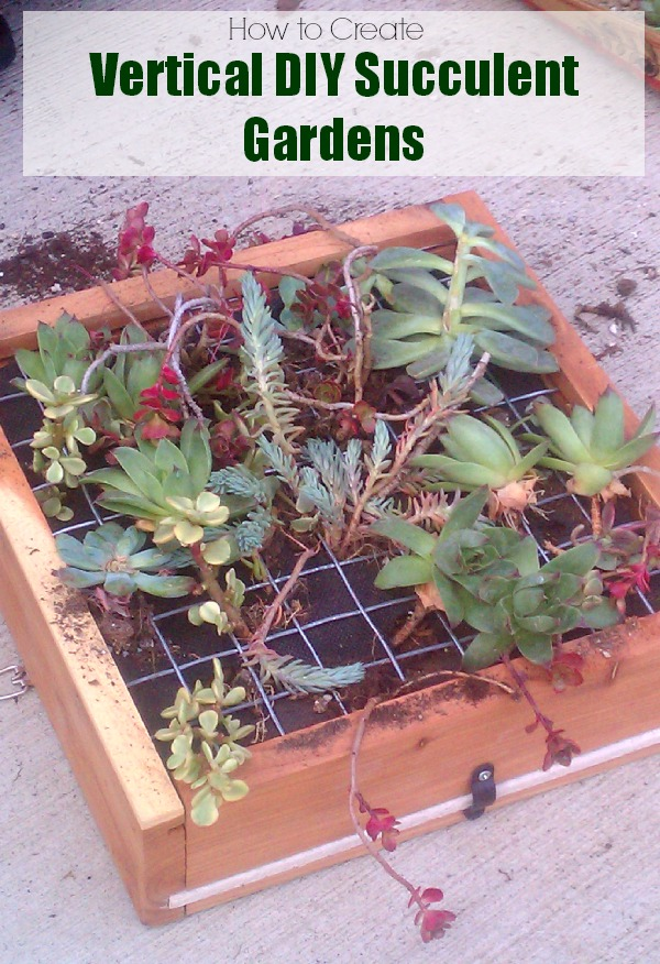 DIY Succulent Gardens: Learn how to make vertical hanging succulent gardens #any1cangrow