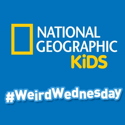 Join Me & @NGKids for a #WeirdWednesday Twitter Party
