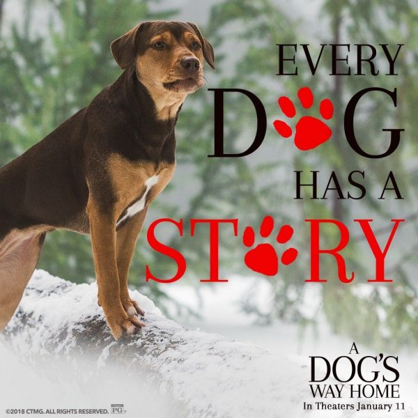 A Dog's Way Home in theaters